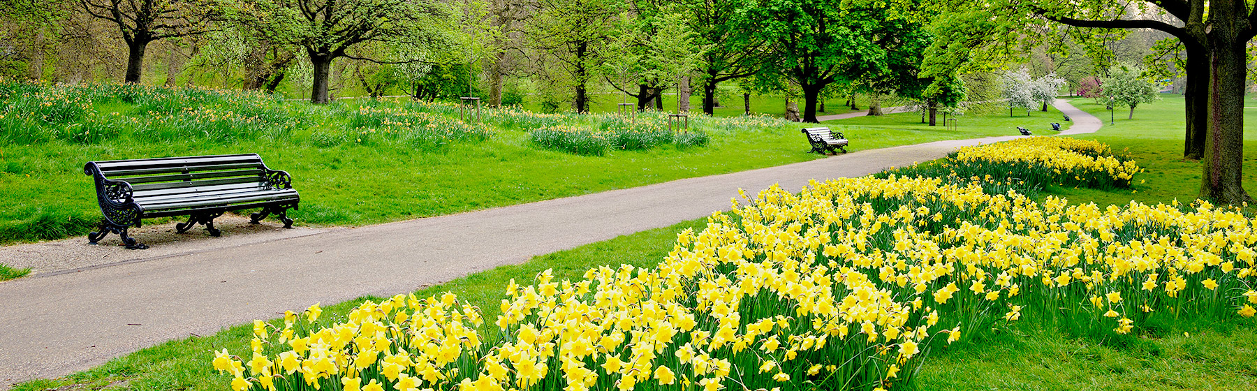 Book Your Hotel in Daffodil Area, Atlanta